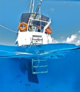 Vanuit Cairns maak je de mooiste excursies, bijvoorbeeld een duiktrip