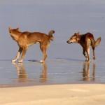 https://www.reisgidsaustralie.nl/wp-content/uploads/2014/07/Fraser-Island-40243.jpg