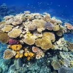 http://www.reisgidsaustralie.nl/wp-content/uploads/2014/07/Great-Barrier-Reef-46600.jpg