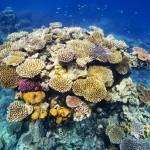 https://www.reisgidsaustralie.nl/wp-content/uploads/2014/07/Great-Barrier-Reef-46600.jpg