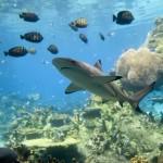 https://www.reisgidsaustralie.nl/wp-content/uploads/2014/07/Great-Barrier-Reef-46602.jpg