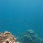 https://www.reisgidsaustralie.nl/wp-content/uploads/2014/07/Great-Barrier-Reef-46603-1024x768.jpg
